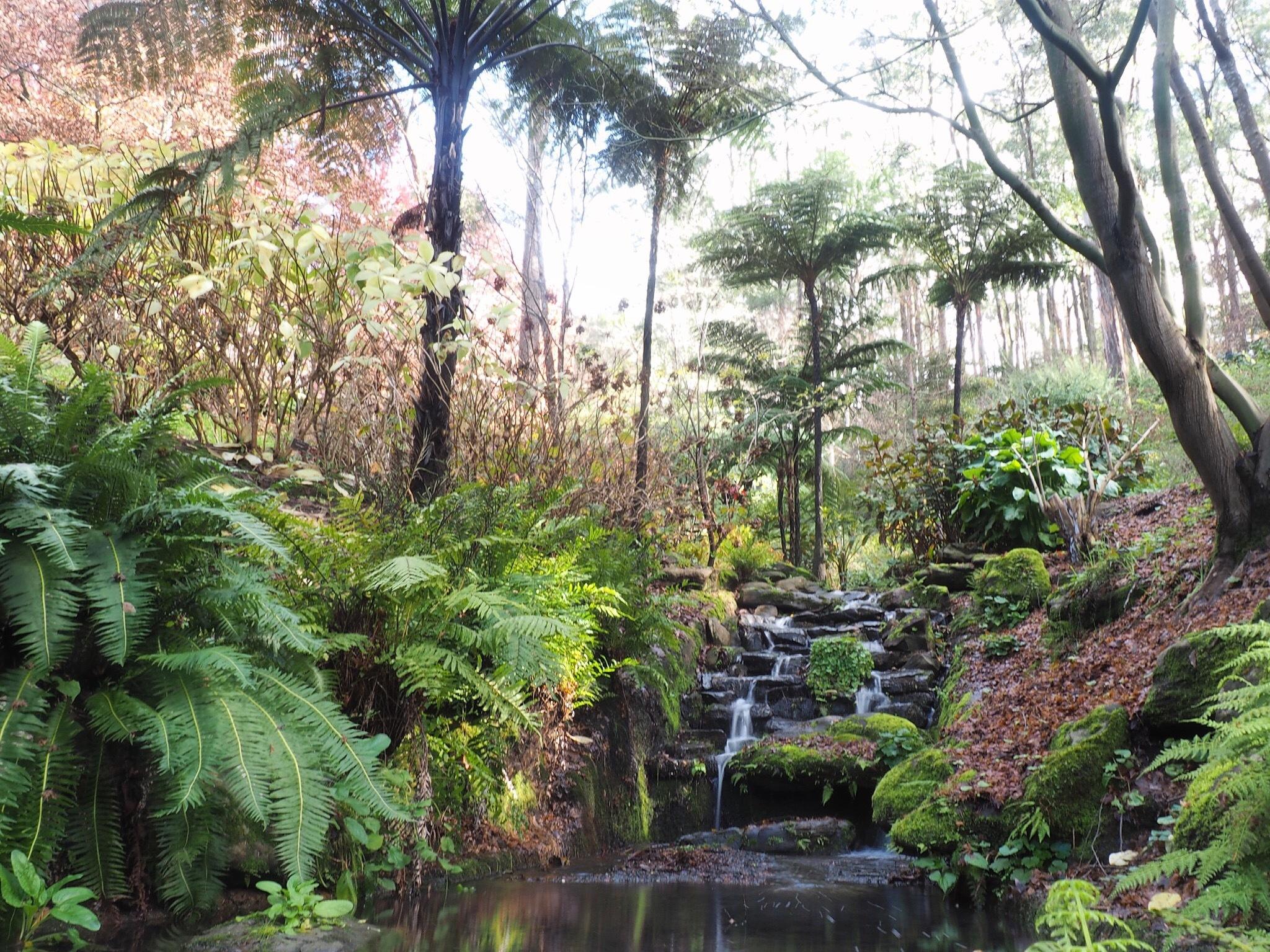 5 Things To Enjoy At Mount Lofty Botanic Garden This