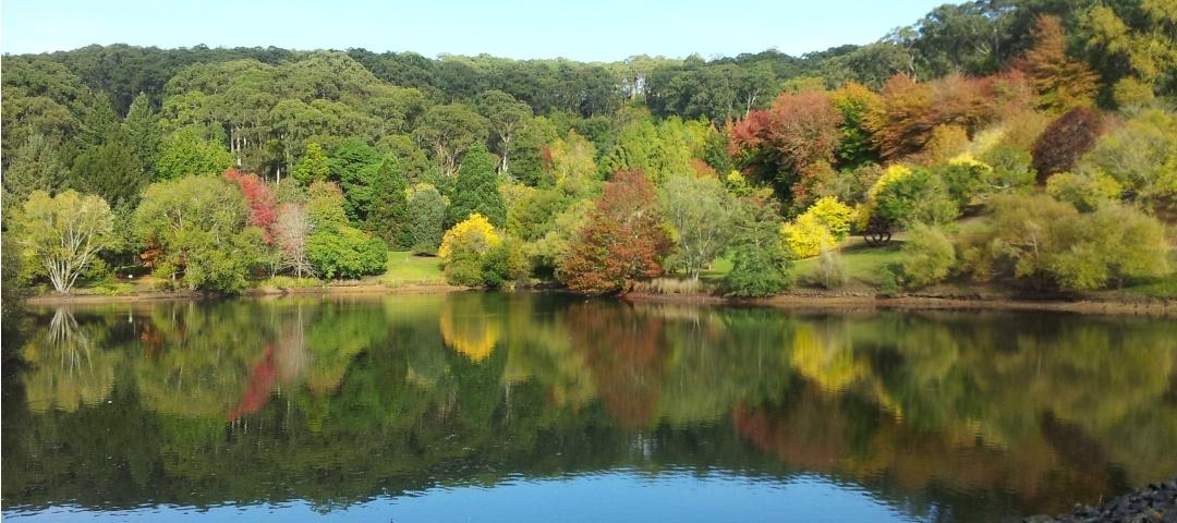 Don T Miss The Autumn Colours Of Mount Lofty Botanic