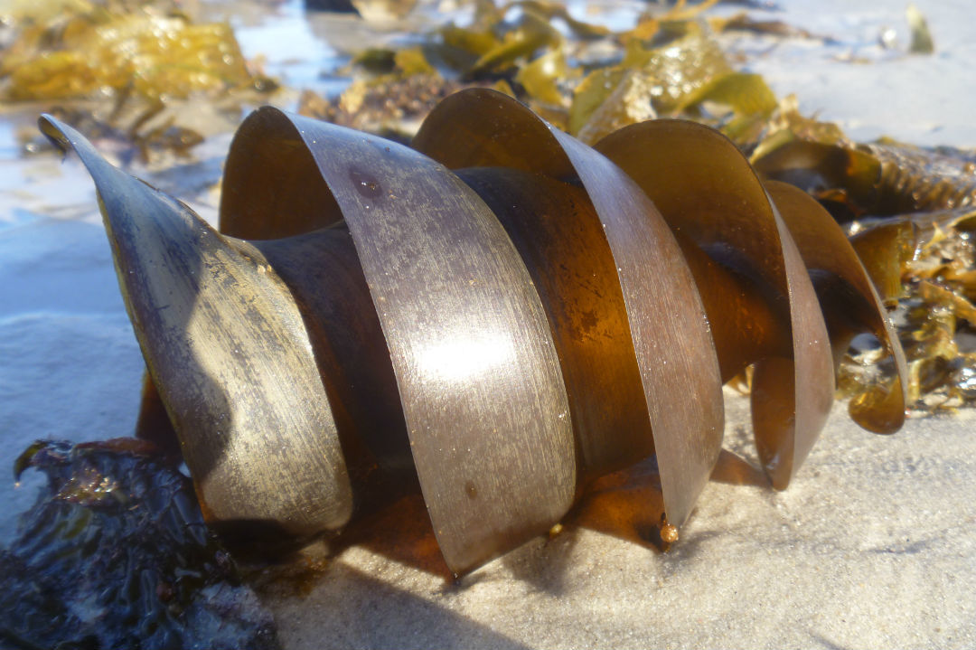beachcombing-body1.jpg