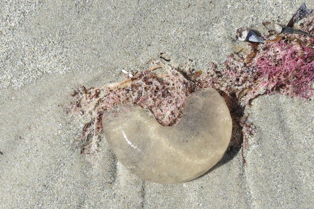 beachcombing-body2.jpg