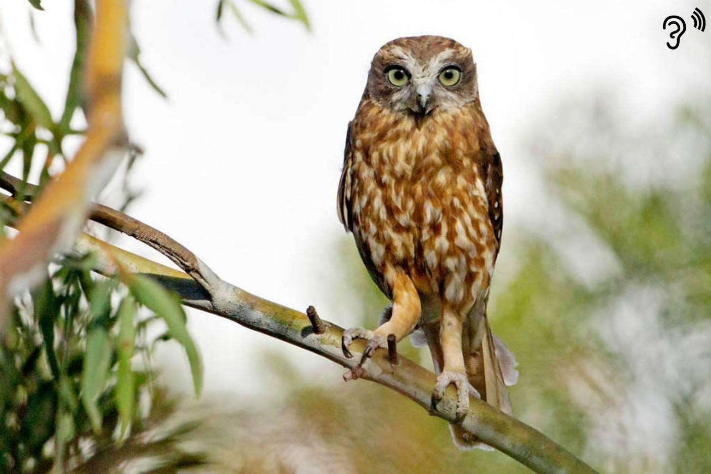 7 bird calls you might hear in South Australia - Good Living