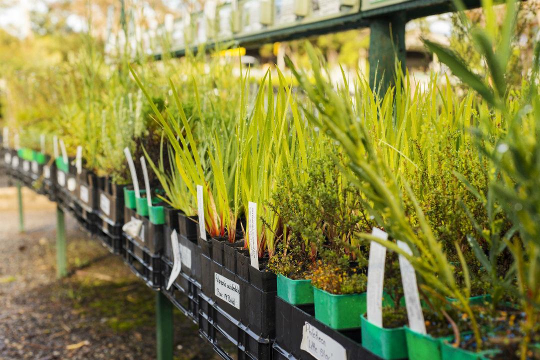 howto create an australian native garden