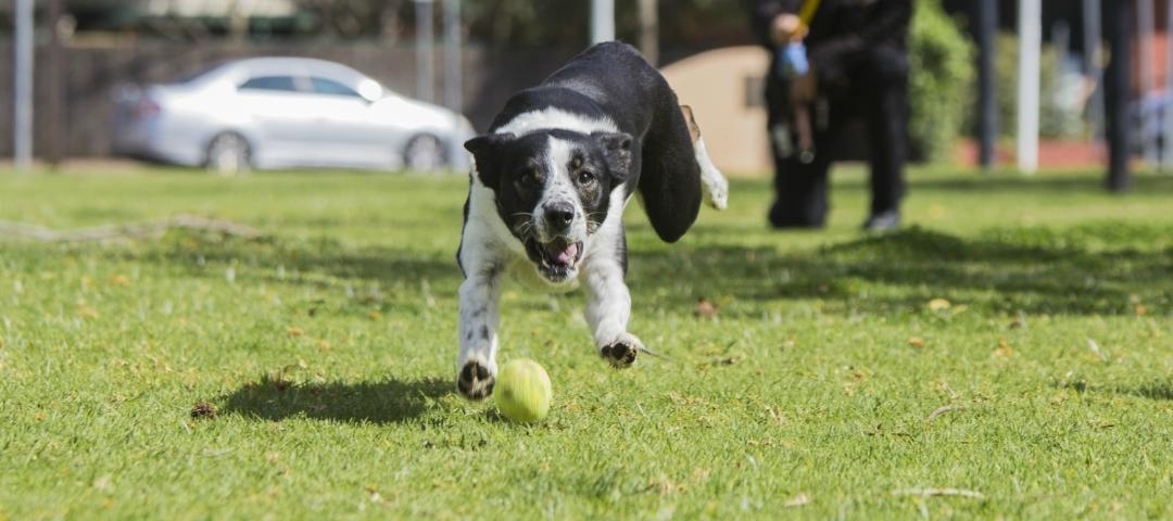 Dog Shelters South Australia