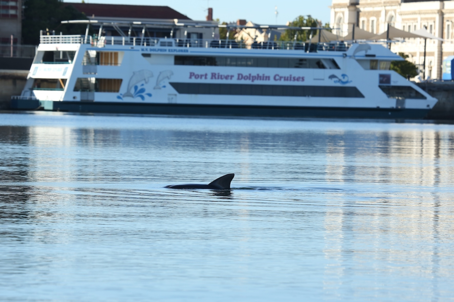 dolphin_explorer.jpg