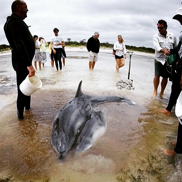 Dolphin stranding 1.JPG