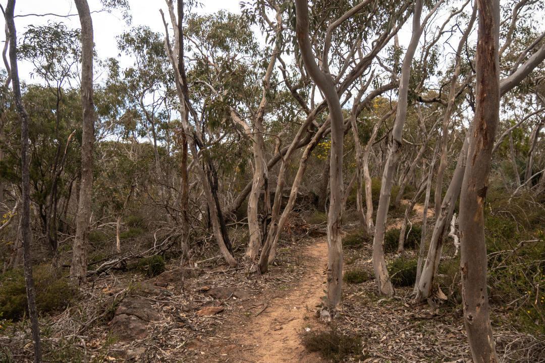 heysen-trail-parks-body3.jpg