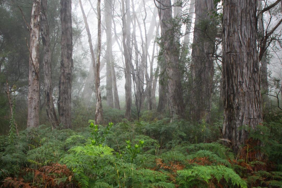 heysen-trail-parks-body4.jpg