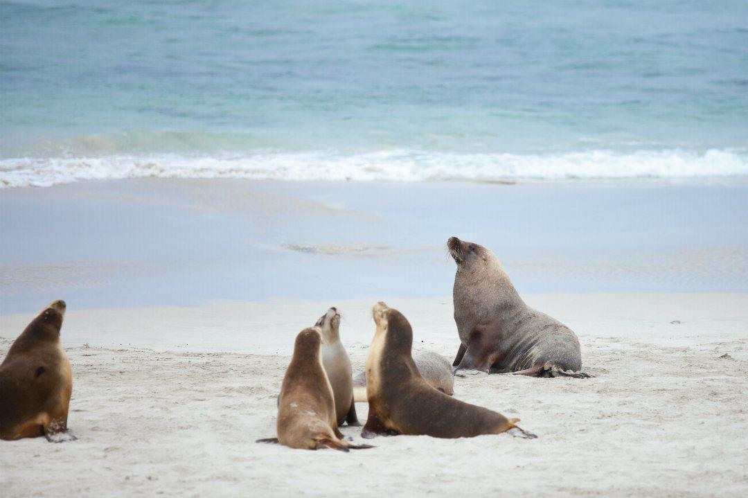 seal-bay-treasures-body1.jpg