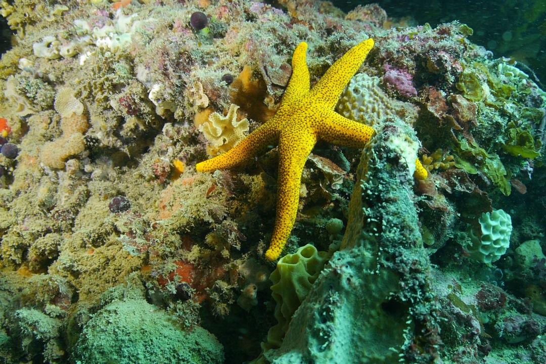 top-snorkel-spots-body1.jpg