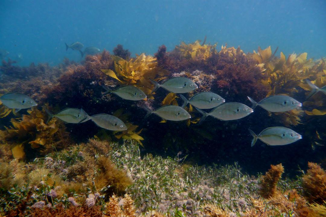 top-snorkel-spots-body2.jpg