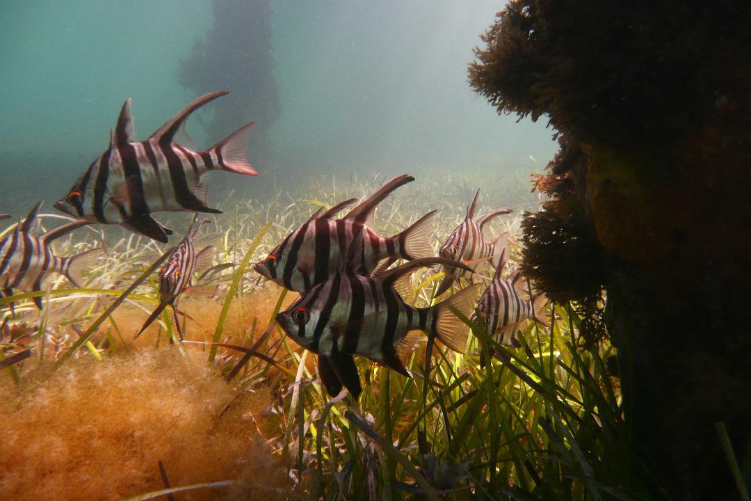 top-snorkel-spots-body5.jpg