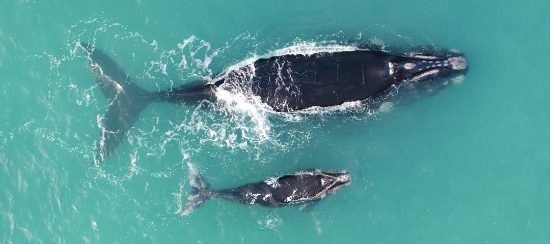 whale-large-final.jpg