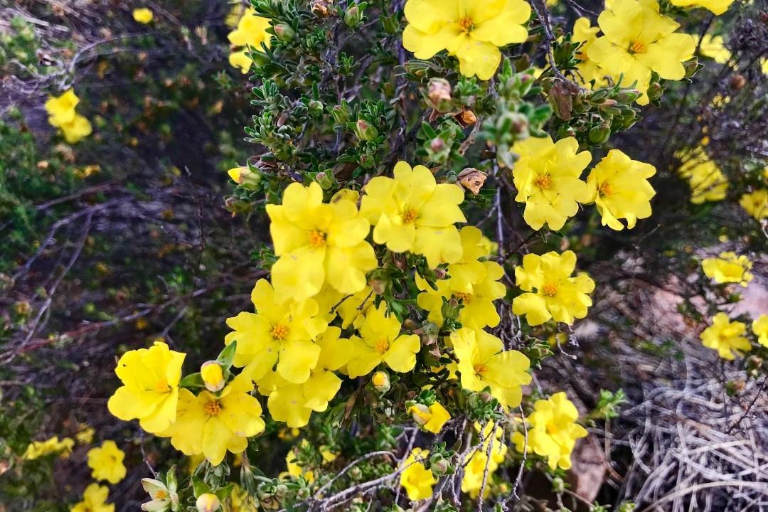 wildflowers-in-the-flinders-ranges-body3.jpg