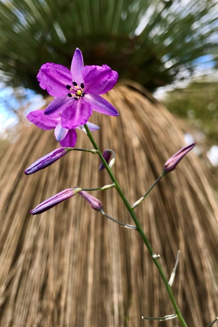 wildflowers-in-the-flinders-ranges-body6.jpg