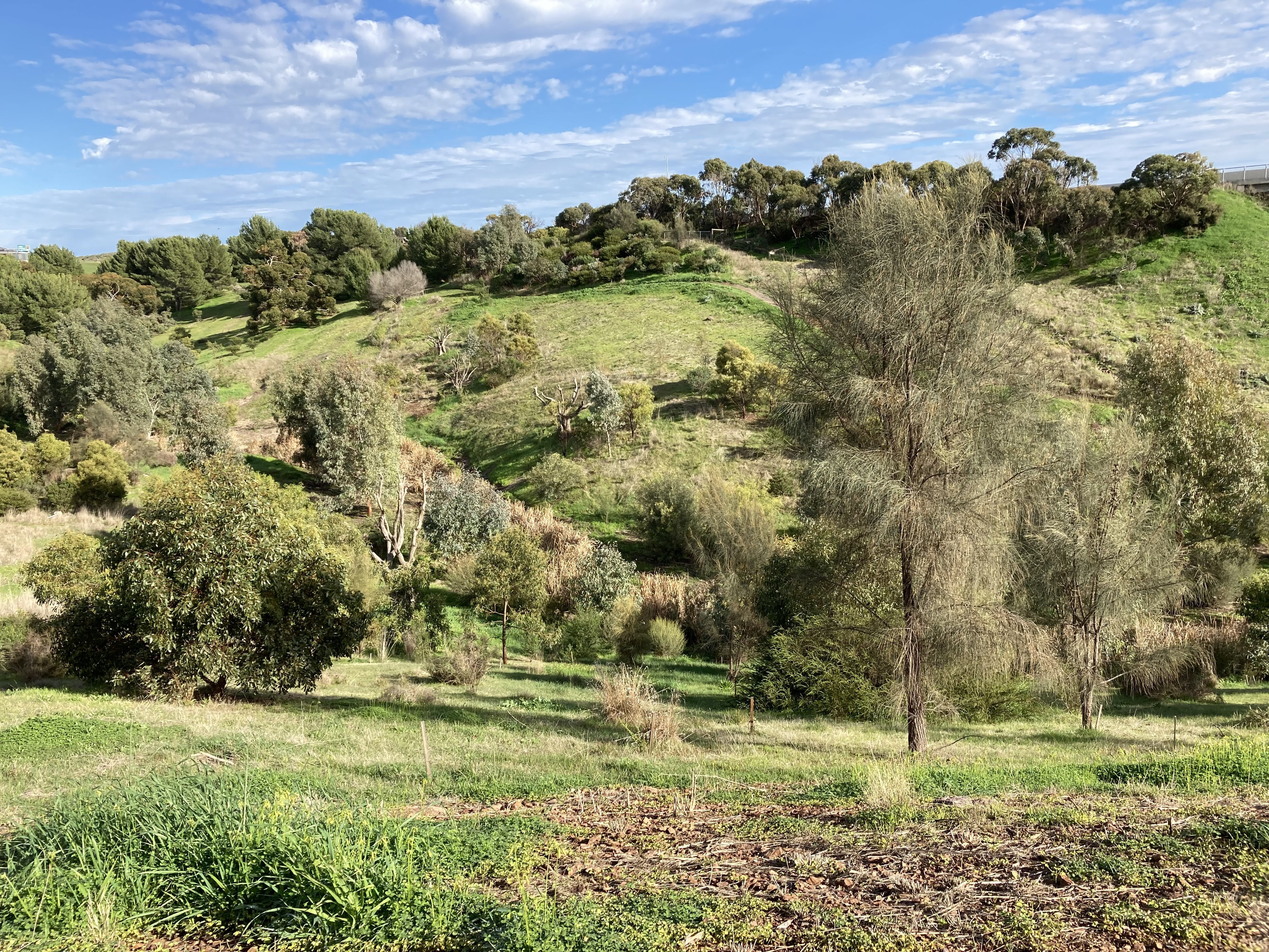 All you need to know about a new environmental project in Adelaide's south - Green Adelaide